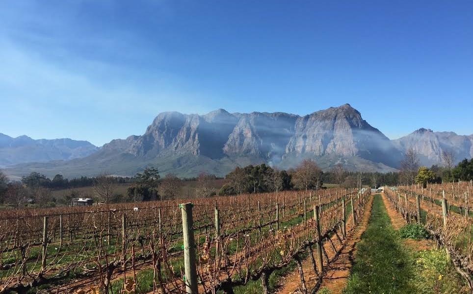 Vineyard South Africa drinkmemag.com drink me