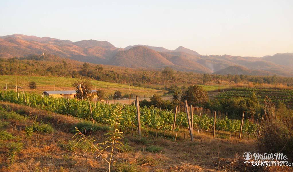 Unusual Wine Regions drinkmemag.com drink me  red mountain estate vineyard