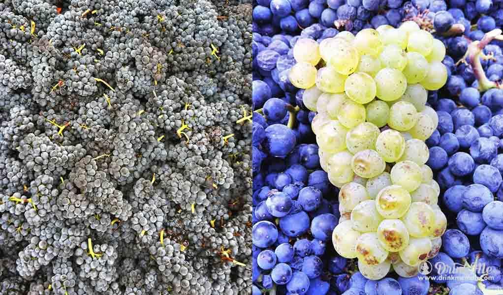 Panthea Winery Vineyards drinkmemag.com drink me wine3