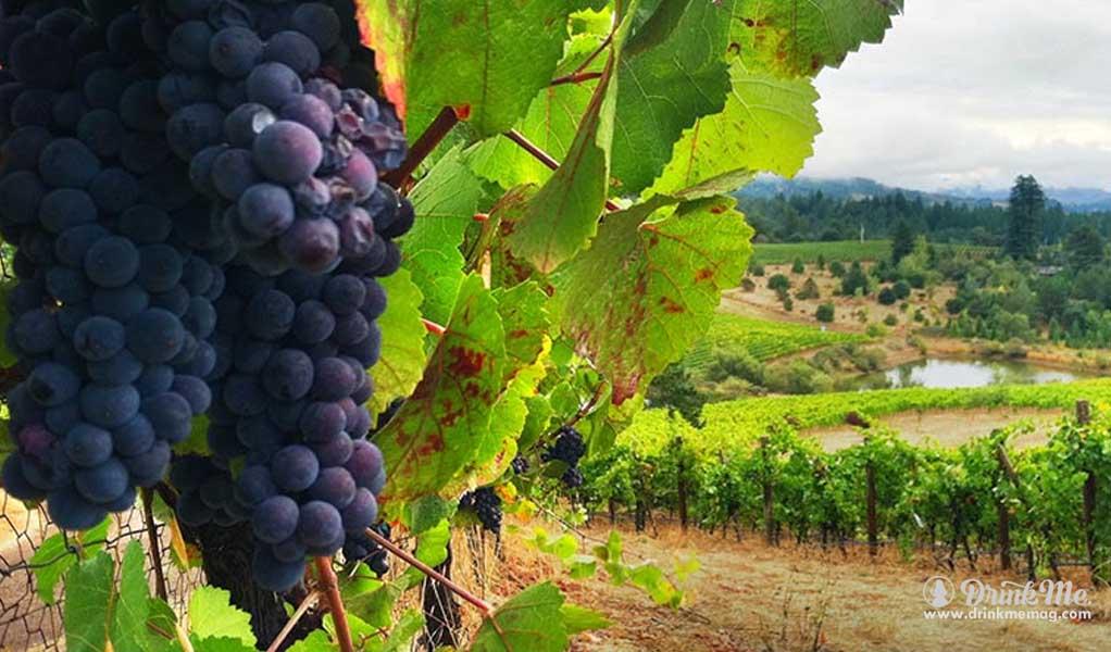 Panthea Winery Vineyards drinkmemag.com drink me wine4