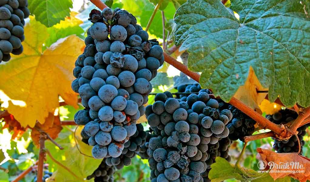 1 drinkmemag.com the most unusual grape varieties in napa valley drink me