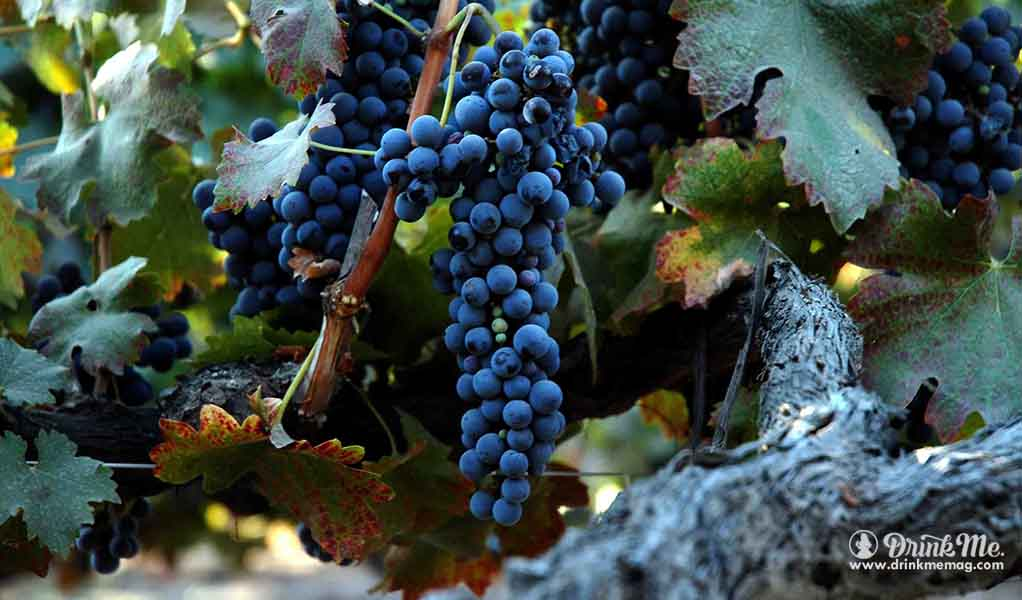 Mondouse drinkmemag.com the most unusual grape varieties in napa valley drink me