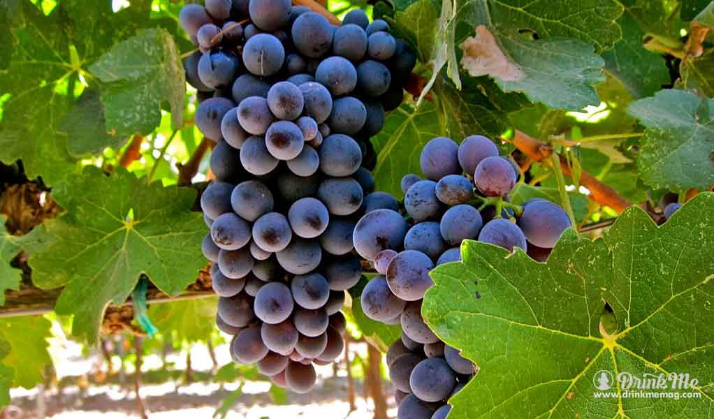 Most Unusual Grape Varieties In Napa Valley drinkmemag.com drink me