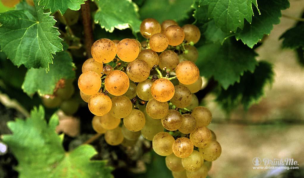 drinkmemag.com bordeaux everyday vordeaux wine millennial cheap bordeaux wine drink me 10
