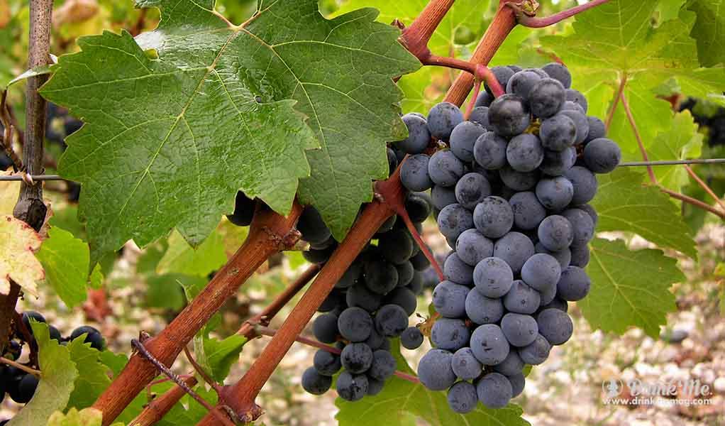 drinkmemag.com bordeaux everyday vordeaux wine millennial cheap bordeaux wine drink me 12