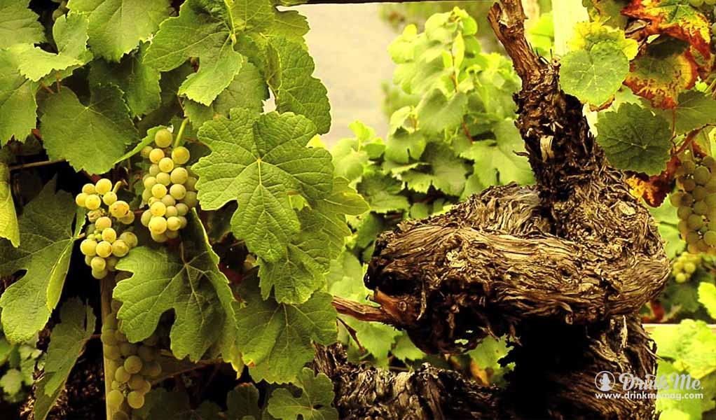Albariño wines drinkmemag.com drink me