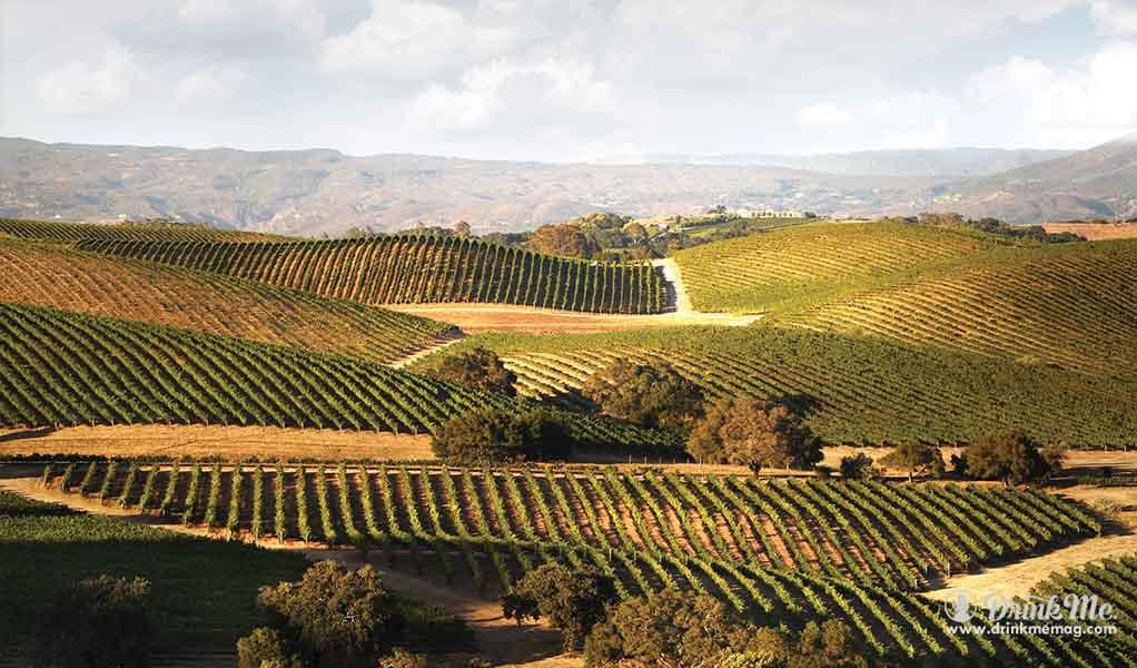 Artesa winery drinkmemag.com drink me