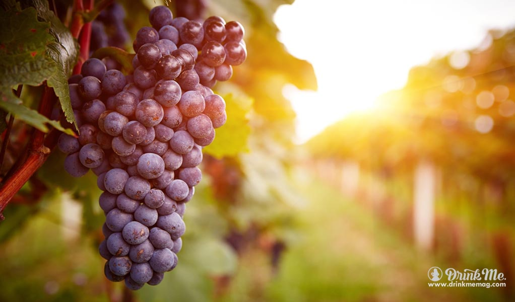 terlato-drinkmemag-com-drink-me-wine-red-wine