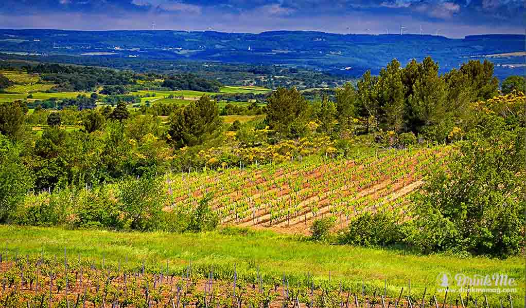 domaine-o-vineyards-drinkmemag-com-drink-me22