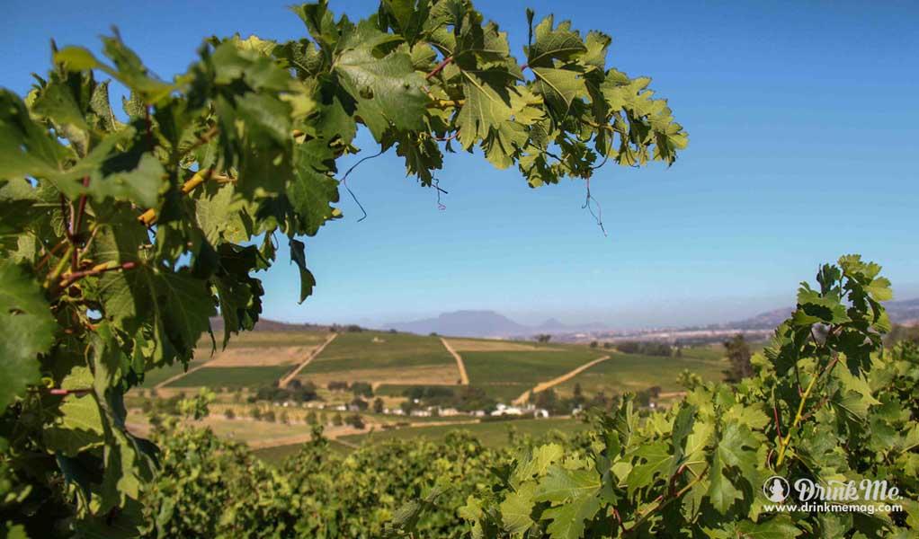 KWV winery drinkmemag.com drink me best wine 111