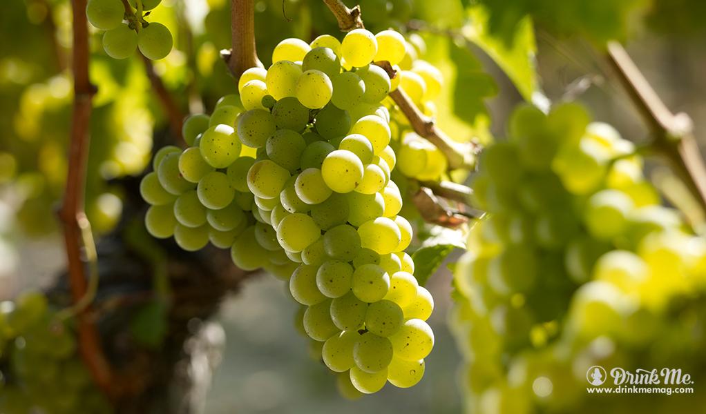 White Bordeaux Featured Image drinkmemag.com drink me CIVB 2017