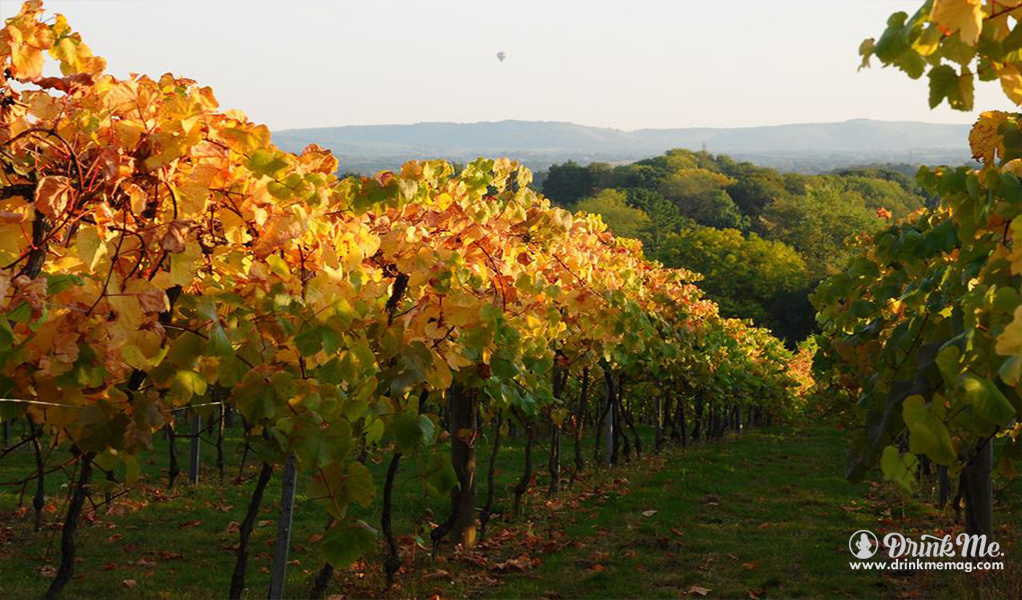 Bolney Wine Estates drinkmemag.com drink me Bolney Wine Estates