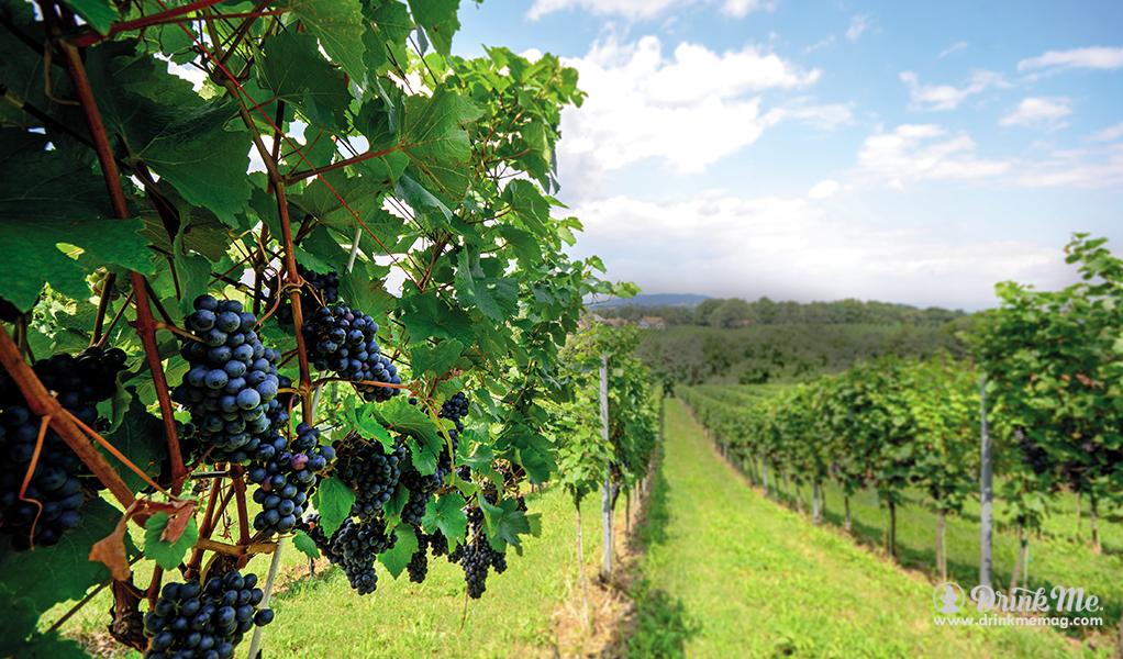 Carluccio's Wine Explorer drinkmemag.com drink me Carluccio's Wine Explorer