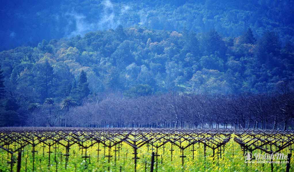 MacMurray vineyards drinkmemag.com drink me California Dreamn'